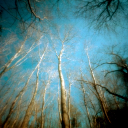 Birch Trees, Prime Hook, Delaware, 2010